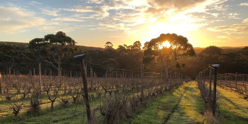 The Islander Estate Vineyards in Kangaroo Island's Kohinoor Hills