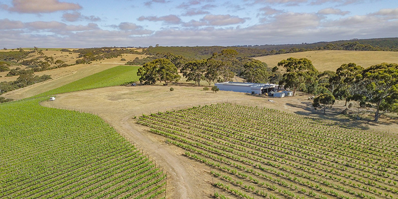 Aerial view of The Islander Estate's vineyard, Kangaroo Island